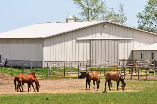 pole barn with horses and cupola